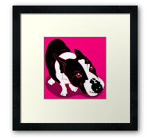 Mr Bull Terrier Pink Framed Print