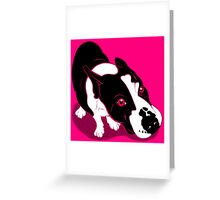 Mr Bull Terrier Pink Greeting Card