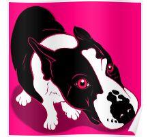 Mr Bull Terrier Pink Poster