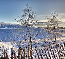 Glentress In Winter by Lynne Morris