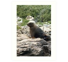 Coffin Bay Local Seal Art Print
