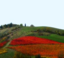 Colours of an Italian Vineyard Sticker