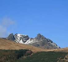 The Cobbler by Paul Bettison
