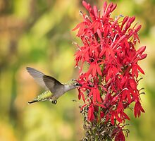 Ruby Throated Hummingbird 8-2015 by Thomas Young