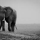 Elephant - Africa by Wim De Wulf