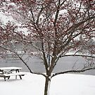 Park bench and tree with winter berries by Poete100