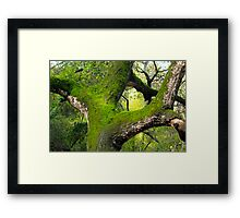 Green Limbs Framed Print