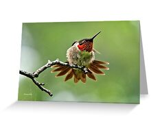 Ruby Throated Hummingbird Greeting Card