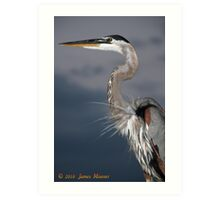Bradenton Great Blue Heron Art Print