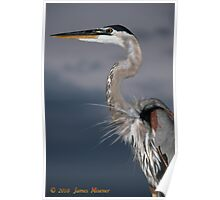 Bradenton Great Blue Heron Poster
