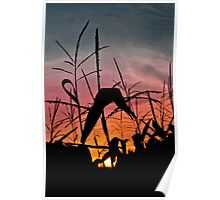 corn in the sunset Poster