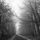 Herefordshire - Frozen Road (1) by PhotoBearUK
