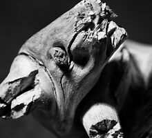 Wooden Remains by andyallenby
