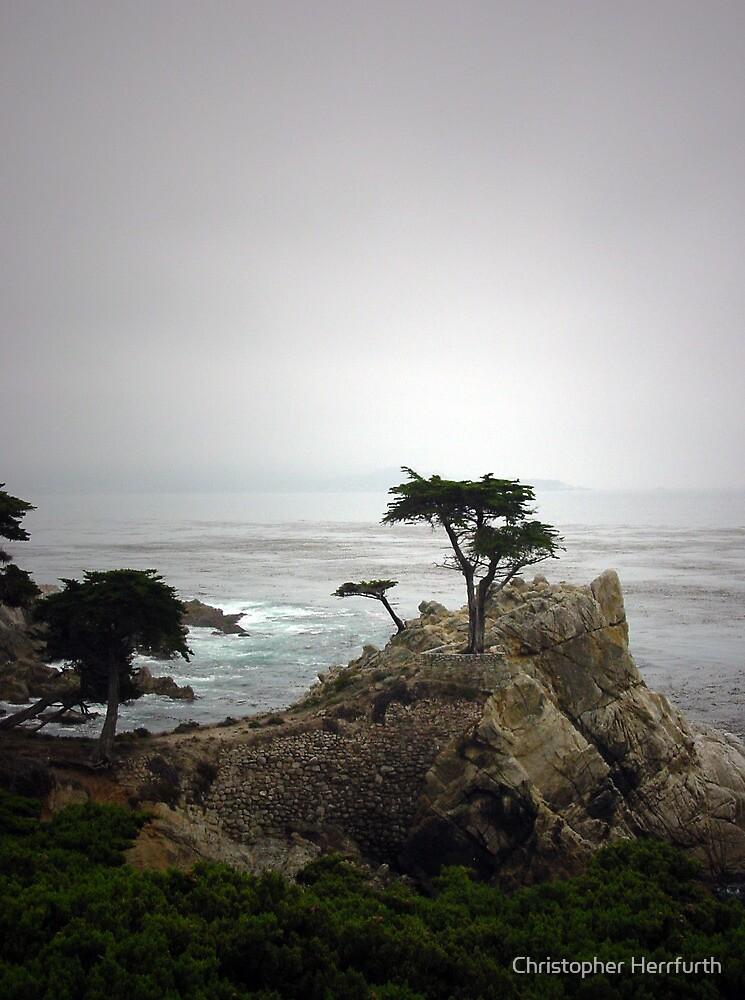 Lone Cypress by Christopher Herrfurth