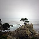 Lone Cypress by Christopher Herrfurth
