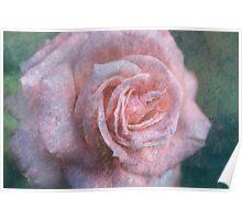 Vintage Rosa  - JUSTART © Poster