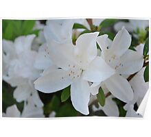 White Wedding Flowers Poster