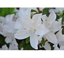 White Wedding Flowers Photographic Print