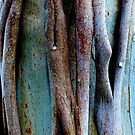 Pealing Bark by ronsphotos