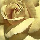 Yellow Rose In Texas by SuddenJim