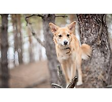 Portrait of a dog. Photographic Print