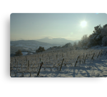 Snowy Vineyard Canvas Print