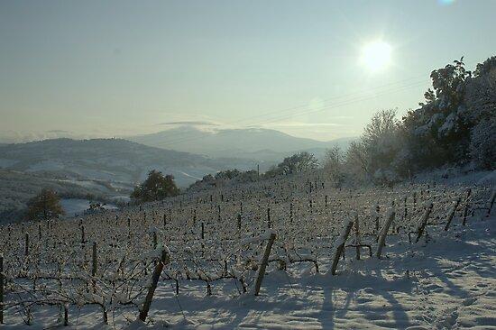 Snowy Vineyard by marens