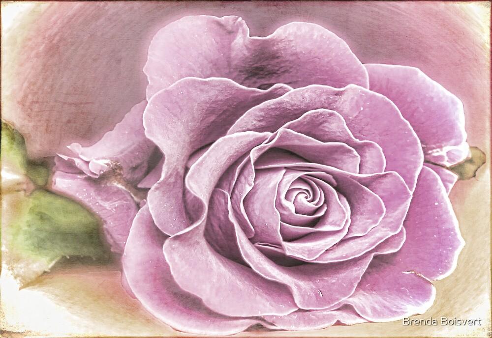 Lavender Rose by Brenda Boisvert