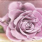 Lavender Rose by Brenda Boisvert