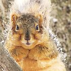Frosted Squirrel On A Tree by lorilee