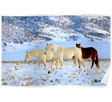 Walking With Wild Horses  Poster