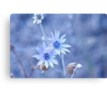 blue wild flower Canvas Print