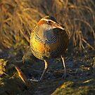 Birds  by Doug Cliff