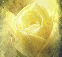 Antique Rose. by Aj Finan