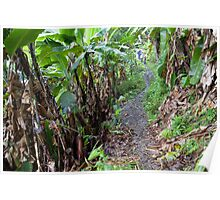 Jungle Walk Poster