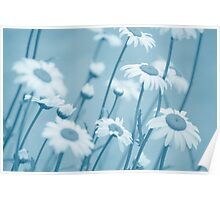 Daisies in Blue #2 Poster