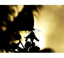 Butterfly Silhoutte Photographic Print