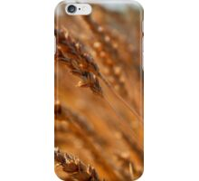 wheat 7 iPhone Case/Skin
