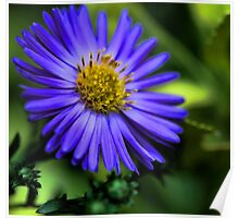 -Potted Fall Aster Poster