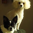 Baxter and Bella by lorilee