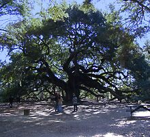 The Angel Oak by barnsis