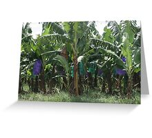 Banana Farm Greeting Card