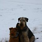 Snow Dogs by Anne Kingston