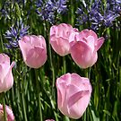 Tulips ~ Dancing in the Sunlight by SummerJade