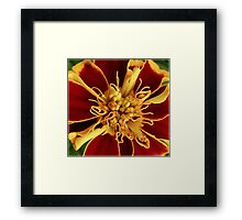 Ready To Burst Framed Print