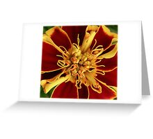 Ready To Burst Greeting Card