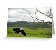 Seen Munching Near Ravenshoe Greeting Card
