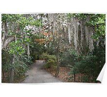Magnolia Plantation (Charleston SC) Poster