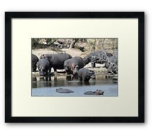 Time to get back in the water! Framed Print