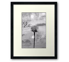 I'm Sorry that you like him Framed Print